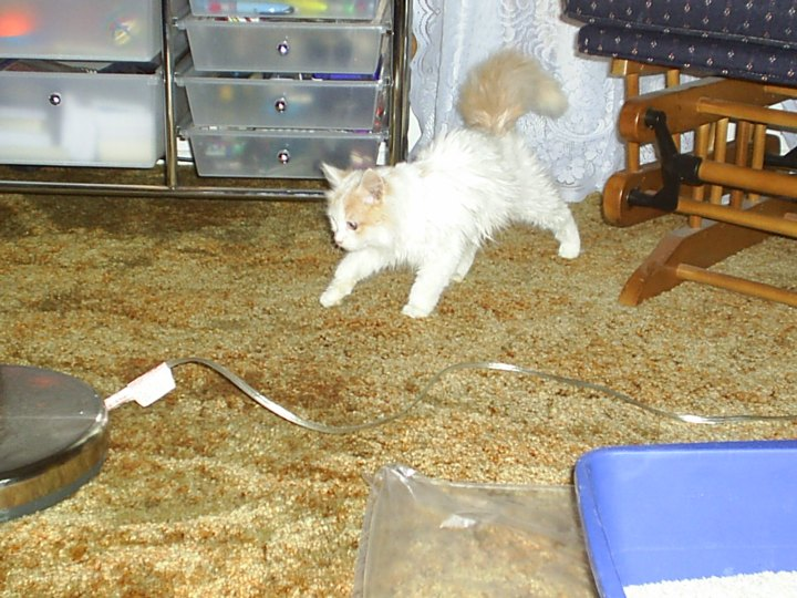 Abby prancing around.  She never walked, she only pranced.  She was a princess and I miss her.  RIP Abby <3
