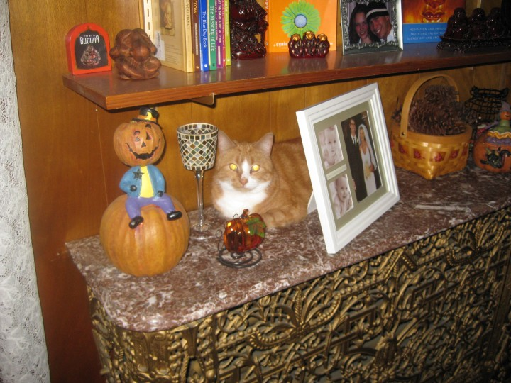 Pumpkin blending into his surroundings, amongst the other Buddha statues.  2008
