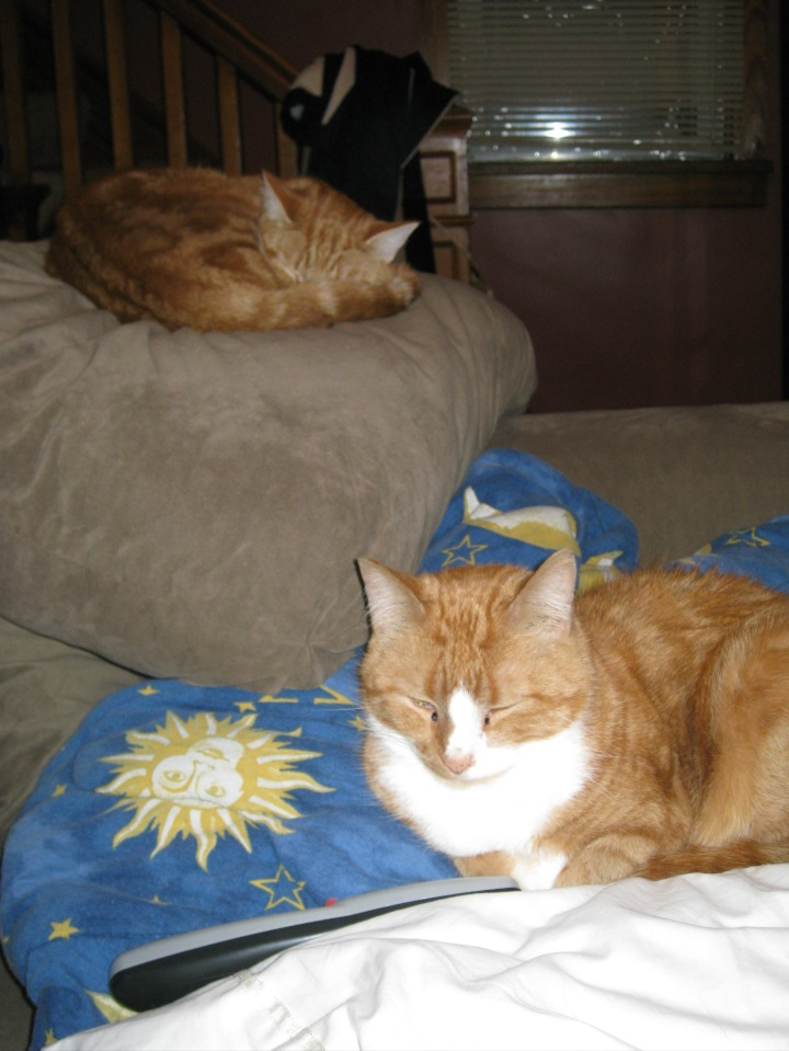 "Joey & Pumpkin keeping vigil while I was on steroids for the MS.  This was the day of my ""official"" diagnosis.  Dec 2009."