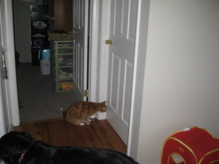 "Joey struggling with the concept of ""Object Permanence"" - ""Was that really Pumpkin they brought in there, or a ghost.  Or am I hallucinating??"" Jan 2011"